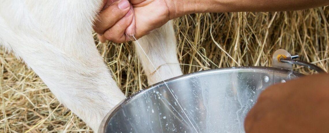Latte di capra: proprietà, benefici e altre caratteristiche da sapere